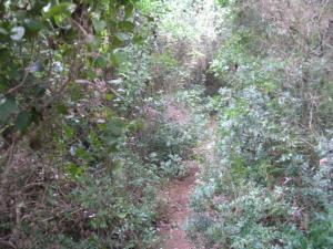 Zarasli put