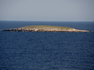 Otok Vrtlić