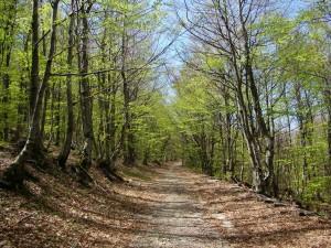 Terezijana - Ljubičko brdo